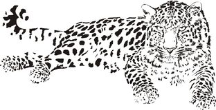 Leopard Vector Illustration Of Black And White Stock Photo