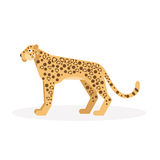 Leopard. Vector Illustration Stock Images