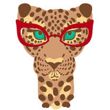 001 leopard 01. Vector illustration, the muzzle of the leopard in fashion glasses for prints on your clothes Royalty Free Stock Photography