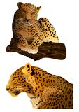 Leopard (vector). Royalty Free Stock Photos