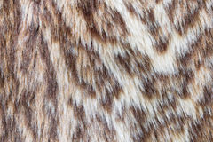 Leopard or Wildcat Fur Background Royalty Free Stock Images