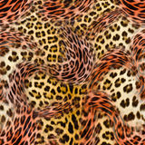 Leopard and zebra background Royalty Free Stock Photos