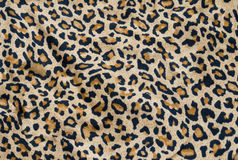 Leopardbakgrund Royaltyfri Fotografi