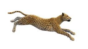 Leopardbetrieb, wildes Tier lokalisiert auf Weiß Lizenzfreie Stockfotos