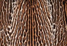 Leoparden flår texturerar Royaltyfri Bild