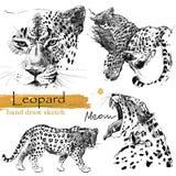 Leoparden skissar wild djur illustration royaltyfri illustrationer