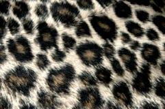 Leopardenmuster Lizenzfreie Stockbilder
