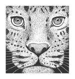 Leopardgravyrillustration Royaltyfri Bild