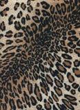 Leopardhäute Stockfotografie
