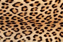 Leopardhauthintergrund stockbilder