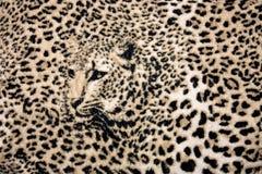 Leopardhintergrund Lizenzfreie Stockfotos