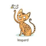 Leopardkatt Katttecken på vit Arkivfoton