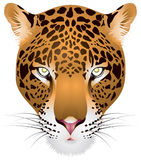 Leopardkopf innen   Lizenzfreie Stockbilder
