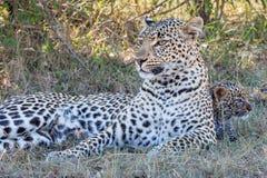 Leopardmamma med leopardgröngölingen arkivfoto
