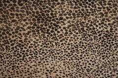 Leopardmustergewebe Stockbild