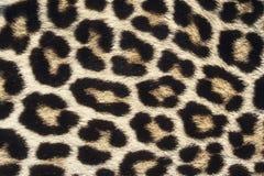 Leopardo Imagenes de archivo
