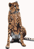Leopardo illustrazione di stock