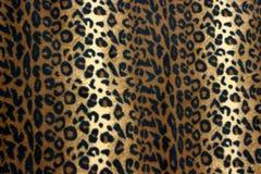 Leopardo fotos de archivo libres de regalías