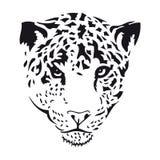 Leopardo ilustração stock