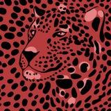 Leopardo 1_1 Fotografia Stock Libera da Diritti