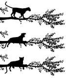 Leopardo del árbol Foto de archivo libre de regalías