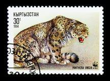 Leopardo delle nevi di seduta (uncia) della panthera, serie di WWF, circa 1994 Fotografia Stock