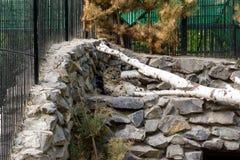 Leopardo delle nevi in una gabbia immagine stock libera da diritti