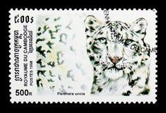 Leopardo delle nevi (uncia) della panthera, serie selvaggio dei gatti, circa 1998 Immagine Stock