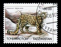 Leopardo delle nevi (uncia) di Uncia, serie di fauna, circa 1993 Immagine Stock