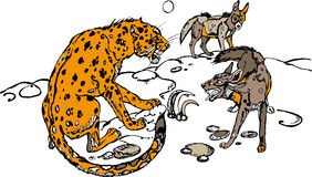 Leopardo e hiena Imagem de Stock