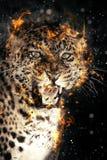 Leopardo en fuego Fotografía de archivo libre de regalías