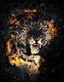 Leopardo en fuego imagen de archivo libre de regalías