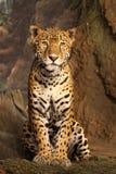 Leopardo escultural Fotografía de archivo