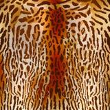 Leopardo, fundo, animal, textura, pele, safari Imagem de Stock
