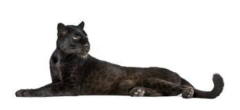 Leopardo negro delante de un fondo blanco Fotografía de archivo