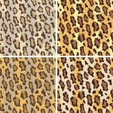 Leopardo Pattern_Tame Fotografia de Stock Royalty Free