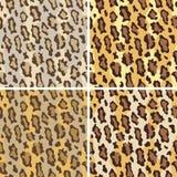Leopardo Pattern_Tame ilustração do vetor
