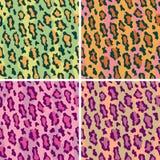 Leopardo Pattern_Wild Imagem de Stock