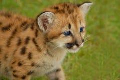 Leopardo pequeno imagem de stock
