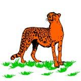Leopardo-predador bonito, no fundo branco ilustração do vetor