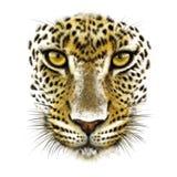 Leopardo su bianco fotografie stock