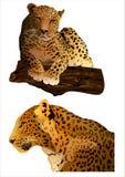 Leopardo (vector) Fotos de archivo libres de regalías