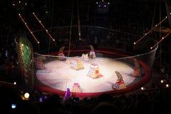 Leopardos en la arena del gran circo del estado de Moscú Fotografía de archivo libre de regalías