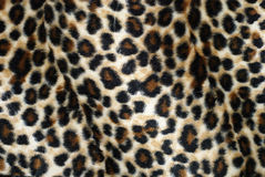 Leopardpelz Lizenzfreie Stockfotos