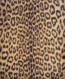 Leopardpelz 3 Stockfotos