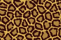 Leopardpelz Stockfoto