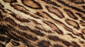 Leopardpelzbeschaffenheit, wirklicher Pelz lizenzfreie stockfotografie