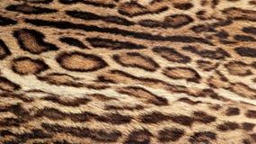 Leopardpelzbeschaffenheit, wirklicher Pelz lizenzfreie stockbilder