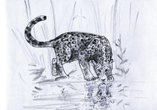 leopardreflexion s Arkivfoto
