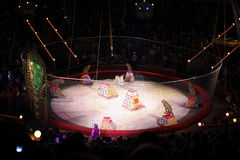Leopards on Arena of the Great Moscow State Circus Royalty Free Stock Photography